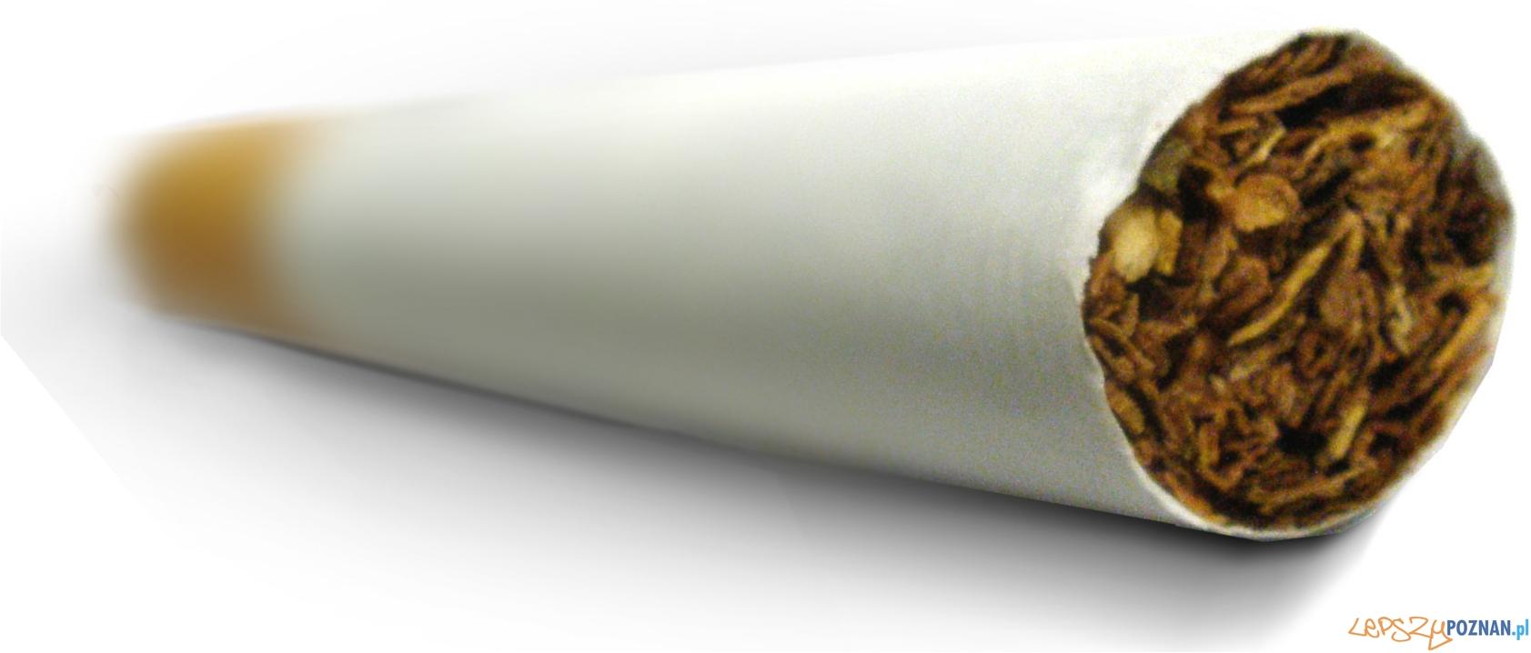 panorama papieros  Foto: sxc