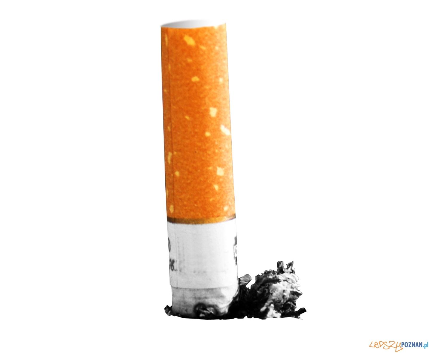 slajder papieros  Foto: sxc