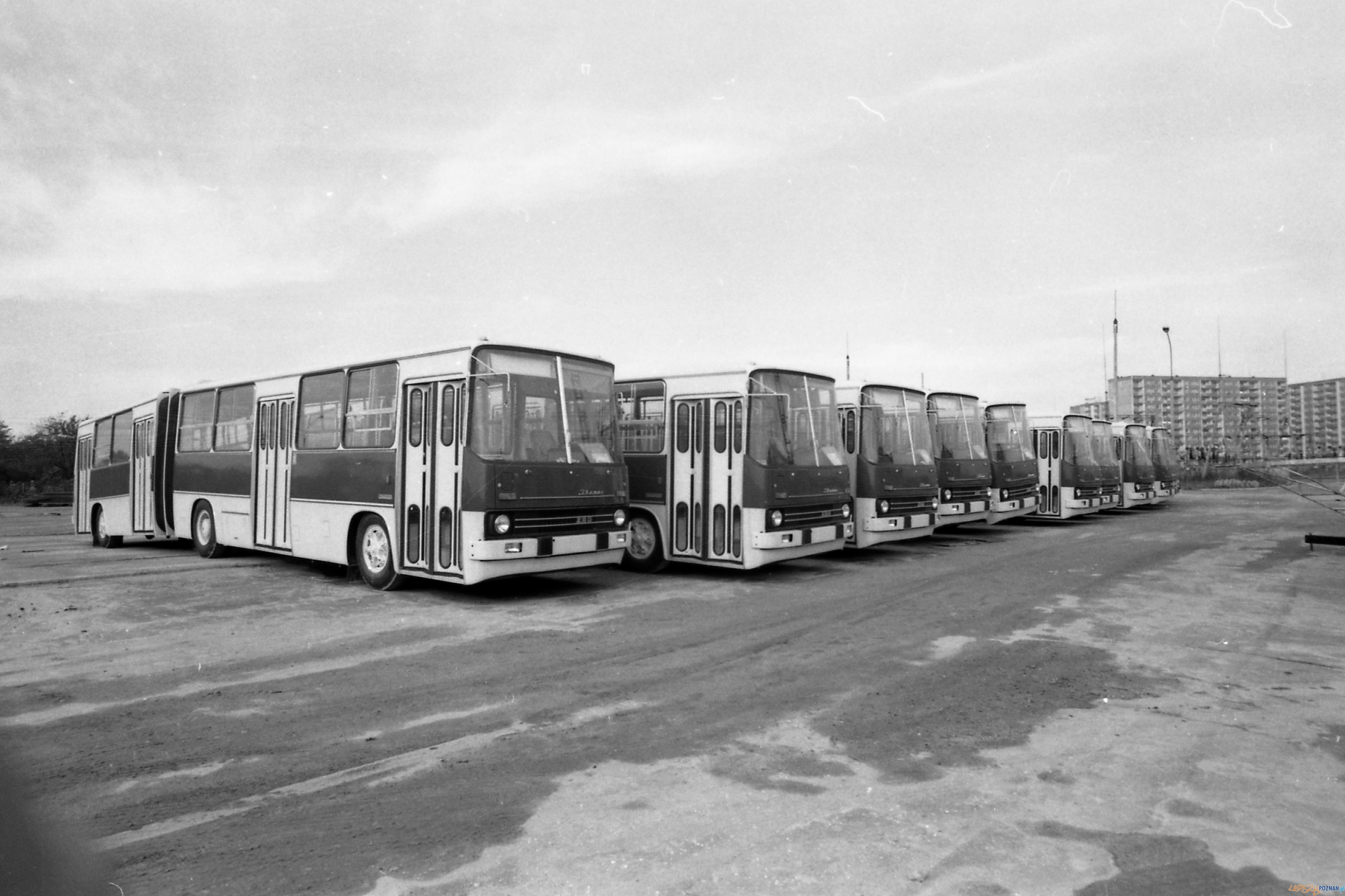 Ikarusy na Kaczej w 1981 roku  Foto: