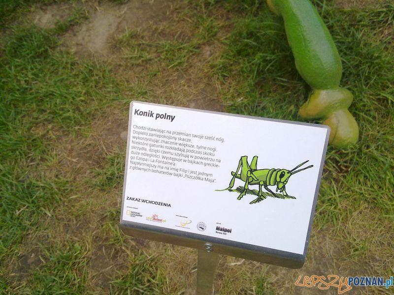 Gigantyczne owady w Starym Browarze (17)  Foto: