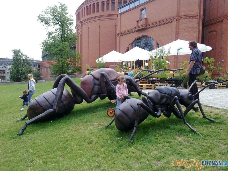 Gigantyczne owady w Starym Browarze (8)  Foto: