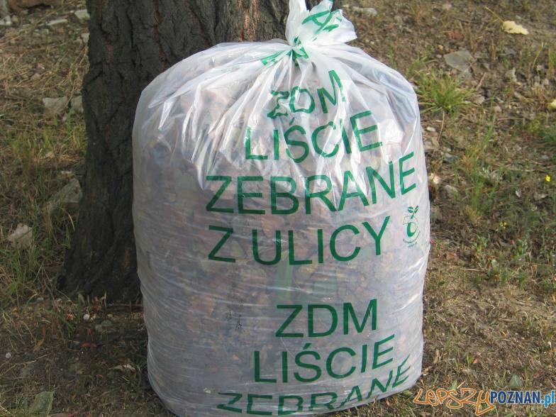 ZDM – liście zebrane z ulicy  Foto: ZDM