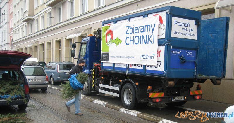 Zbieramy Choinki  Foto: UM Poznania