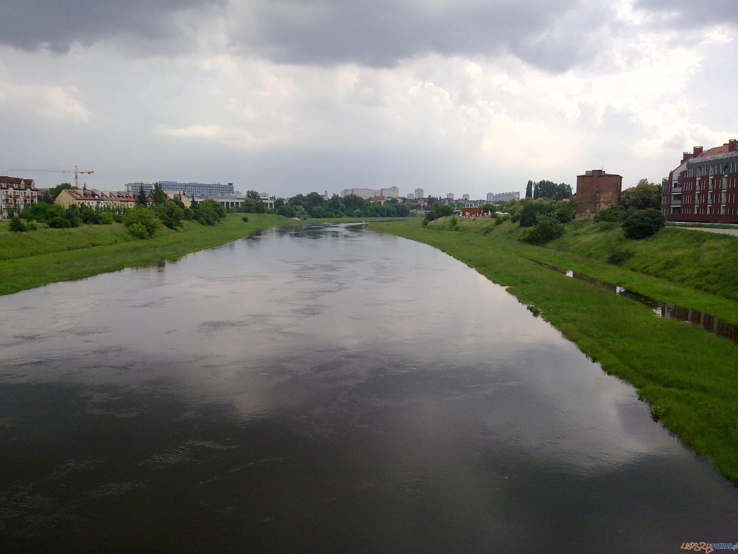 Rzeka Warta - czerwiec 2013  Foto: