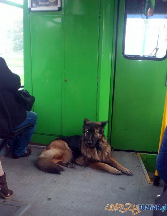 O psie, który jechał bimbą  Foto: Ireneusz
