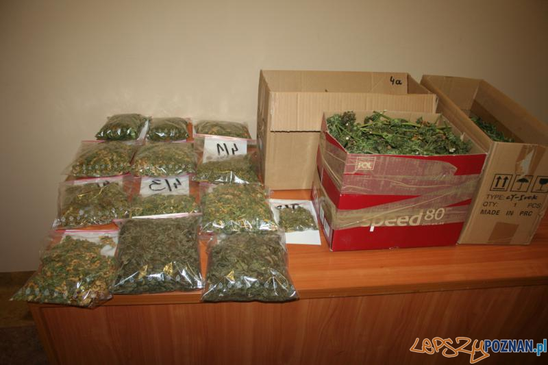 Polcja zatrzymala plantatora marihuany (4)  Foto: