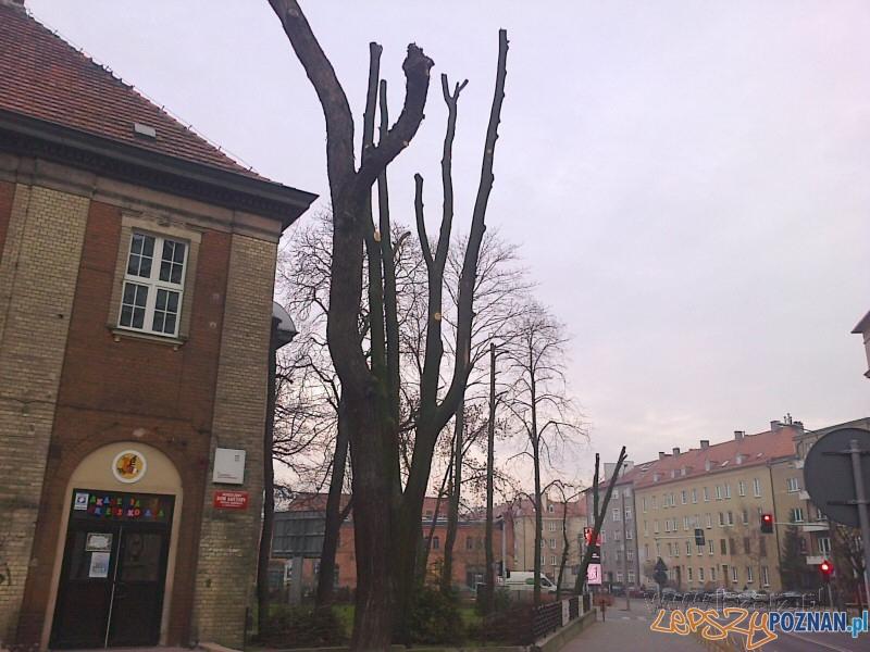 Oszpecone drzewa na Jarochowskiego  Foto: Janusz Ludwiczak/lazarz.pl