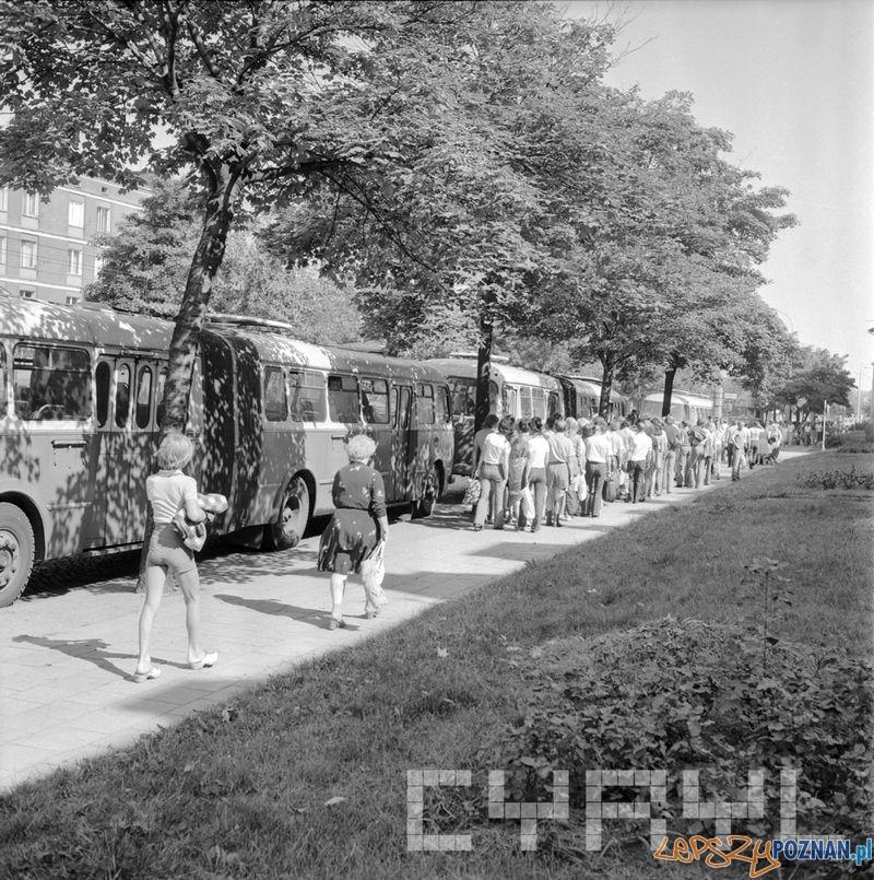 Parking dla autobusów przy Parku Kasprowicza 1975  Foto: