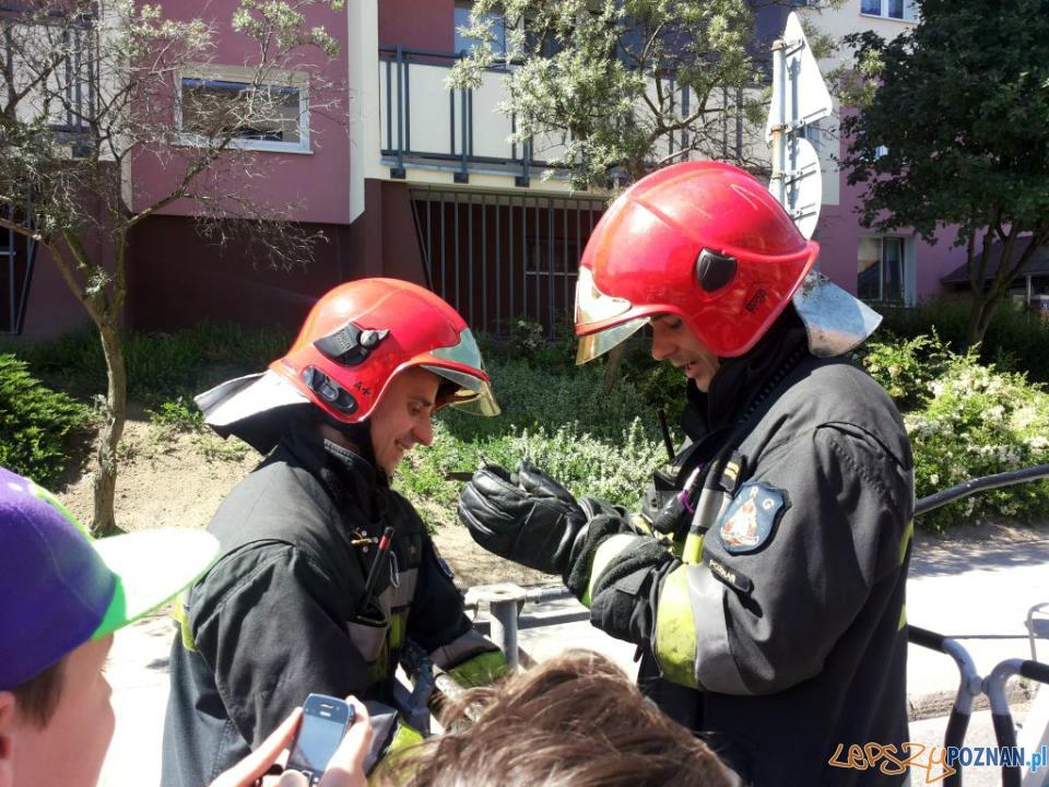 Strażacy bez sikawek, ale z ptakiem  Foto: JRG-8