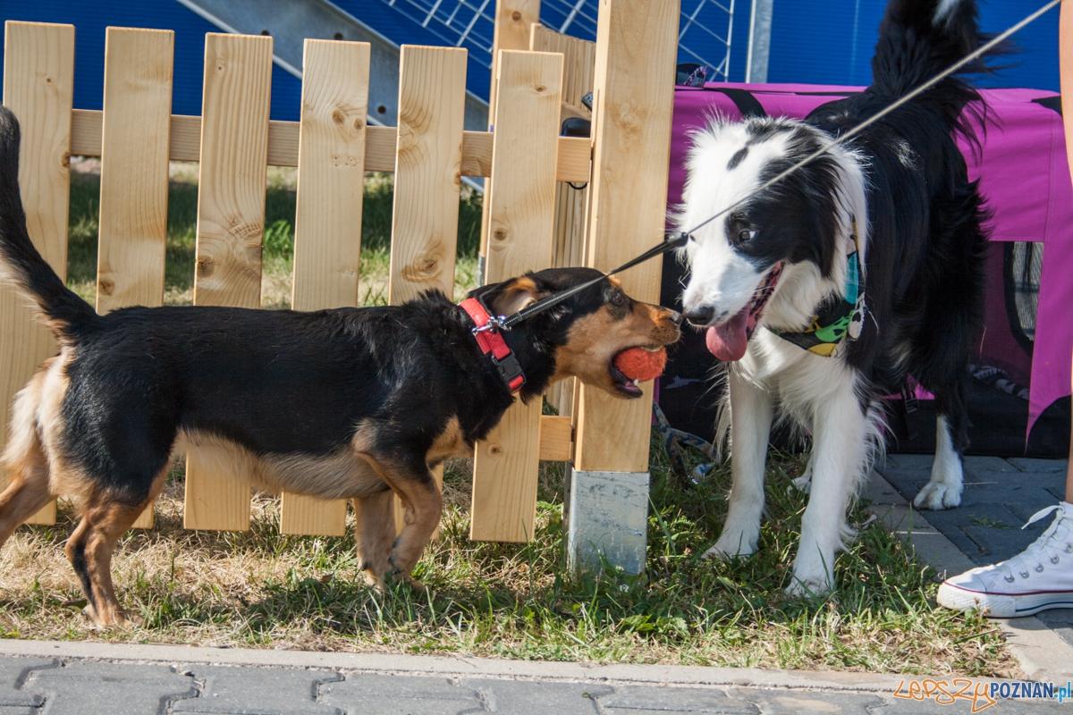 Pierwszy parking dla psów w Poznaniu (21.08.2015) Franowo  Foto: © Karolina Kiraga