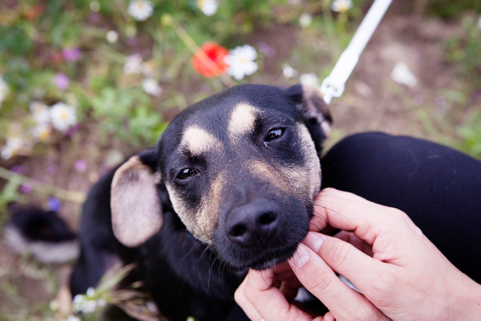 Na pomoc zwierzakom  Foto: Fundacja Zwierzęce Marzenia