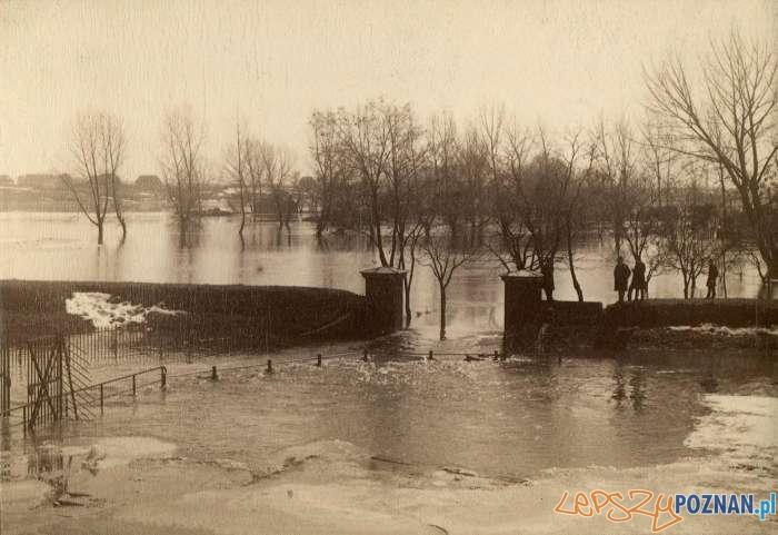 Powódź 1888 widok na Łęgi Dębińskie  Foto: MKZ