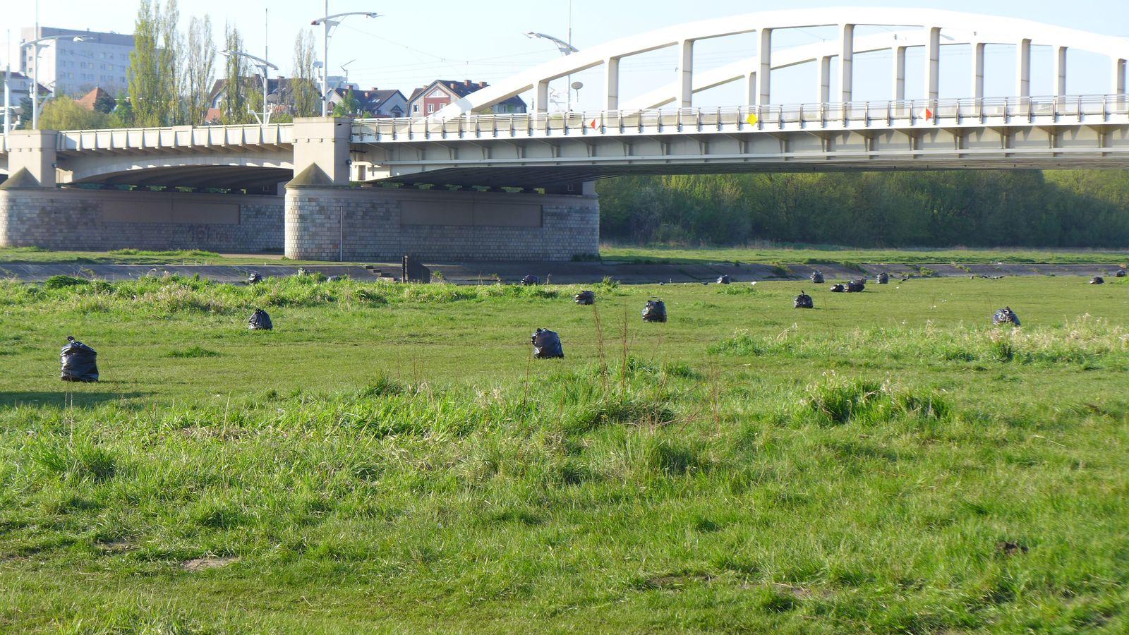 Bałagan nad Wartą - posprzataj po sobie (2)  Foto: UMP