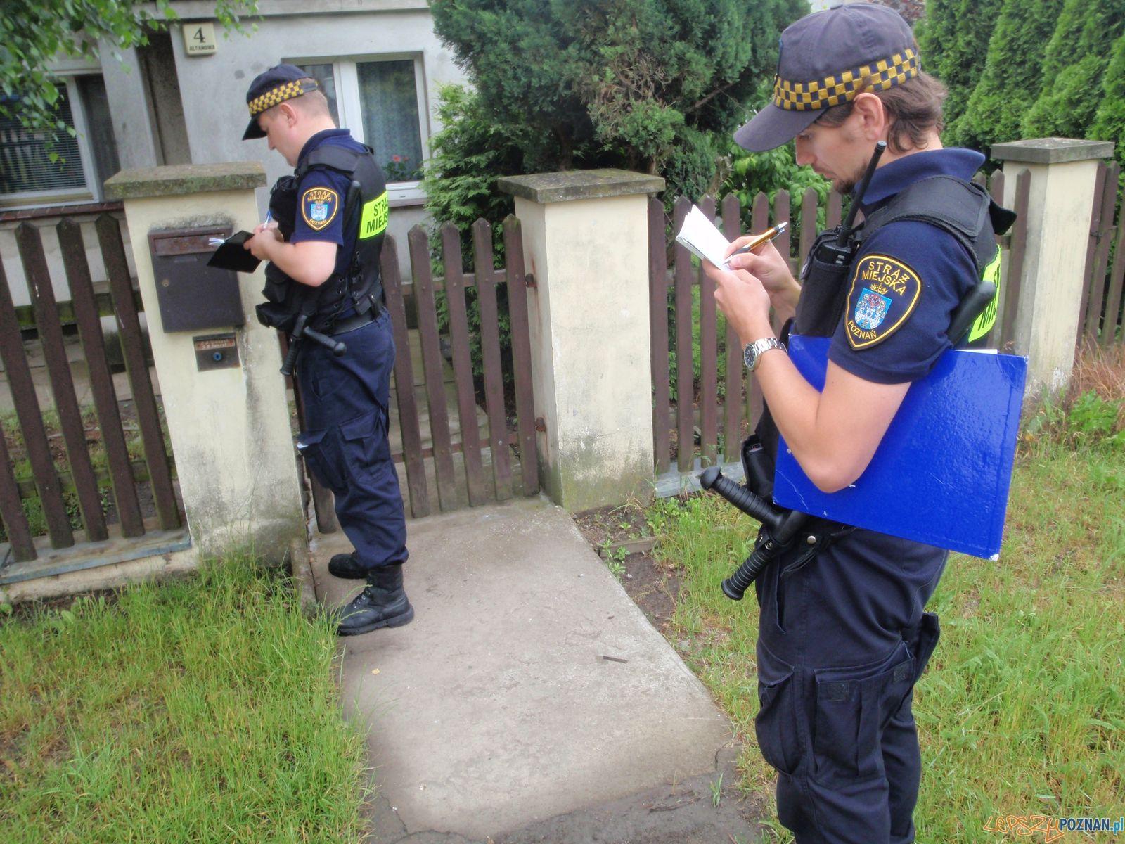 Kontrole Straży Miejskiej w Kiekrzu  Foto: SM