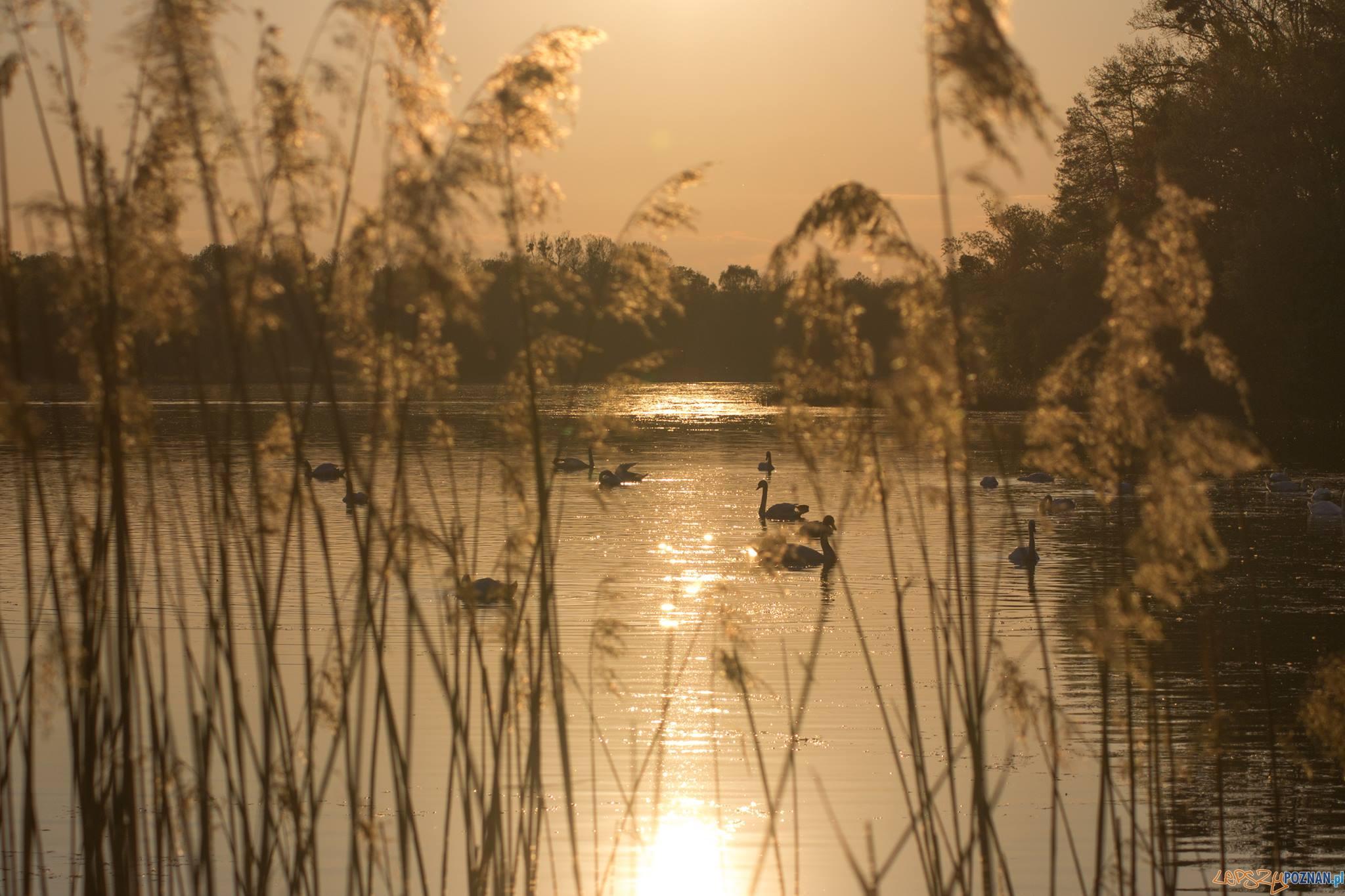 jezioro Strzeszyńskie  Foto: Ewelina Jaśkowiak