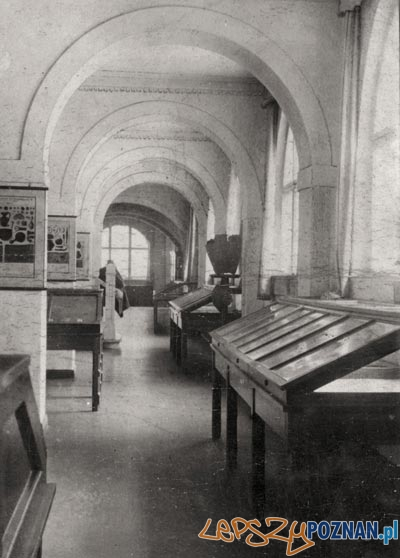 Wnętrza sal muzeum im. Mielżyńskich  Foto: Muzeum Archeologiczne