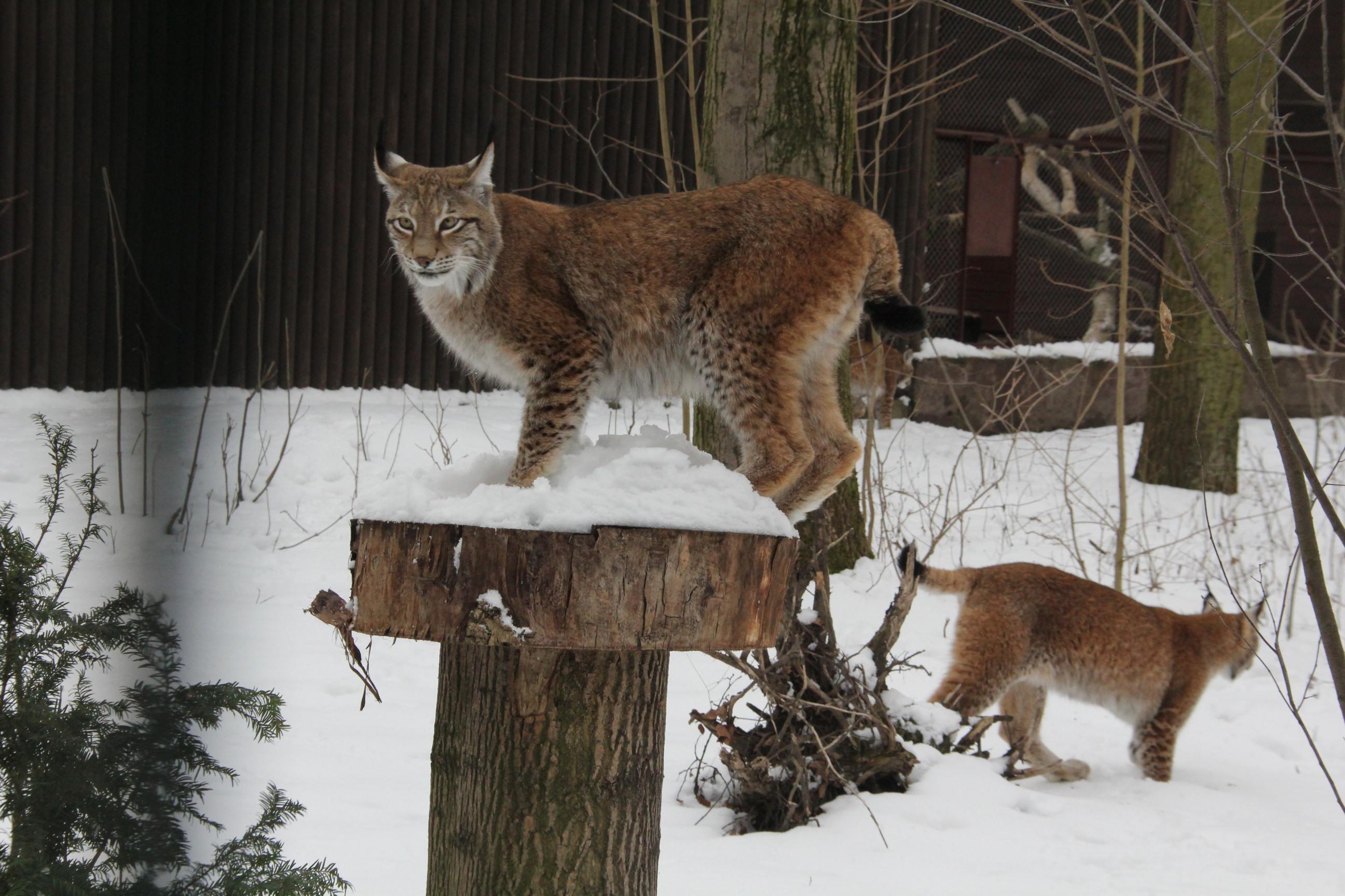 Zwierzaki w zoo - zima  Foto: ZOO Poznań