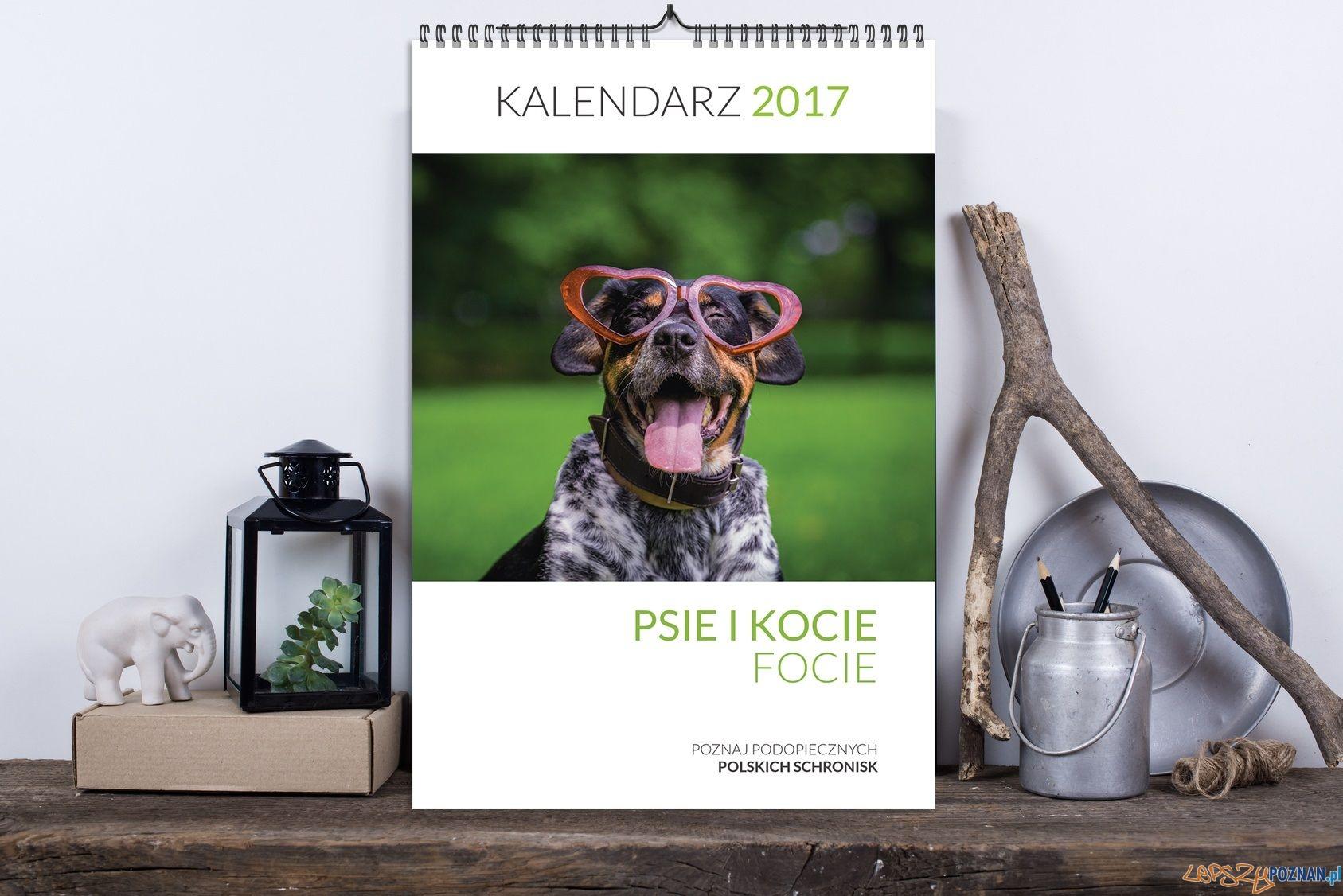 Psie i kocie focie  Foto: materiały prasowe