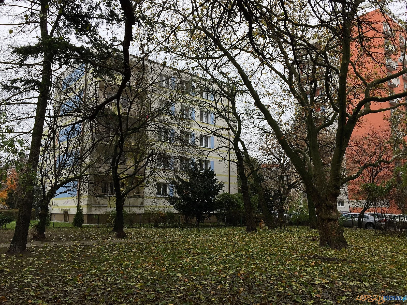 Solna 17 - zielony skwer  Foto: Marcin Liminowicz / Rada Osiedla Stare Miasto