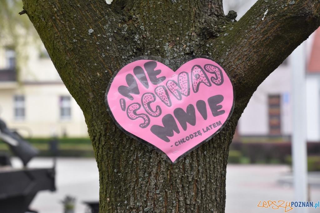 W obronie drzew  Foto: UMiG Pobiedziska