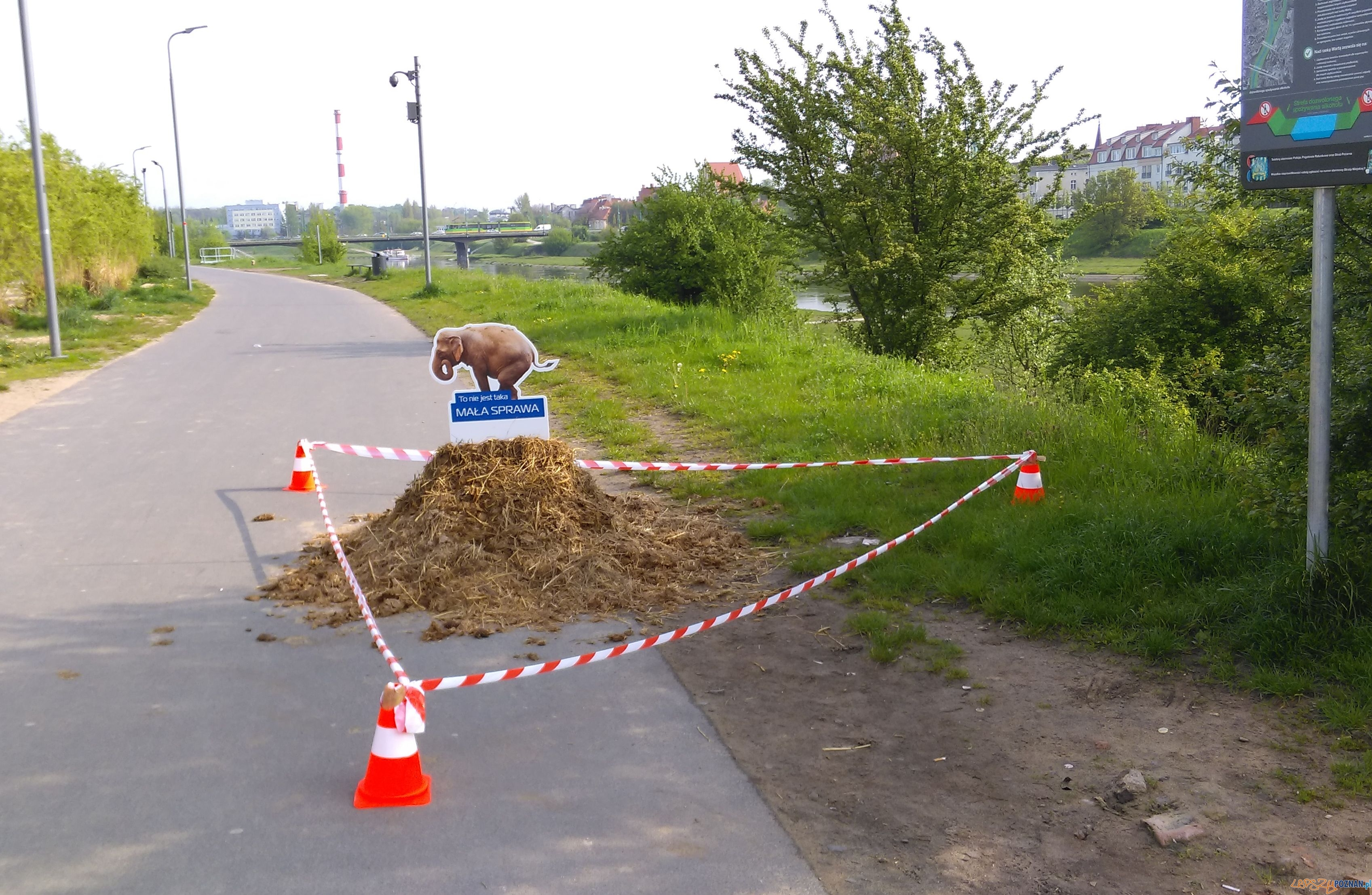 Sprzątaj po swoim psie  Foto: TD