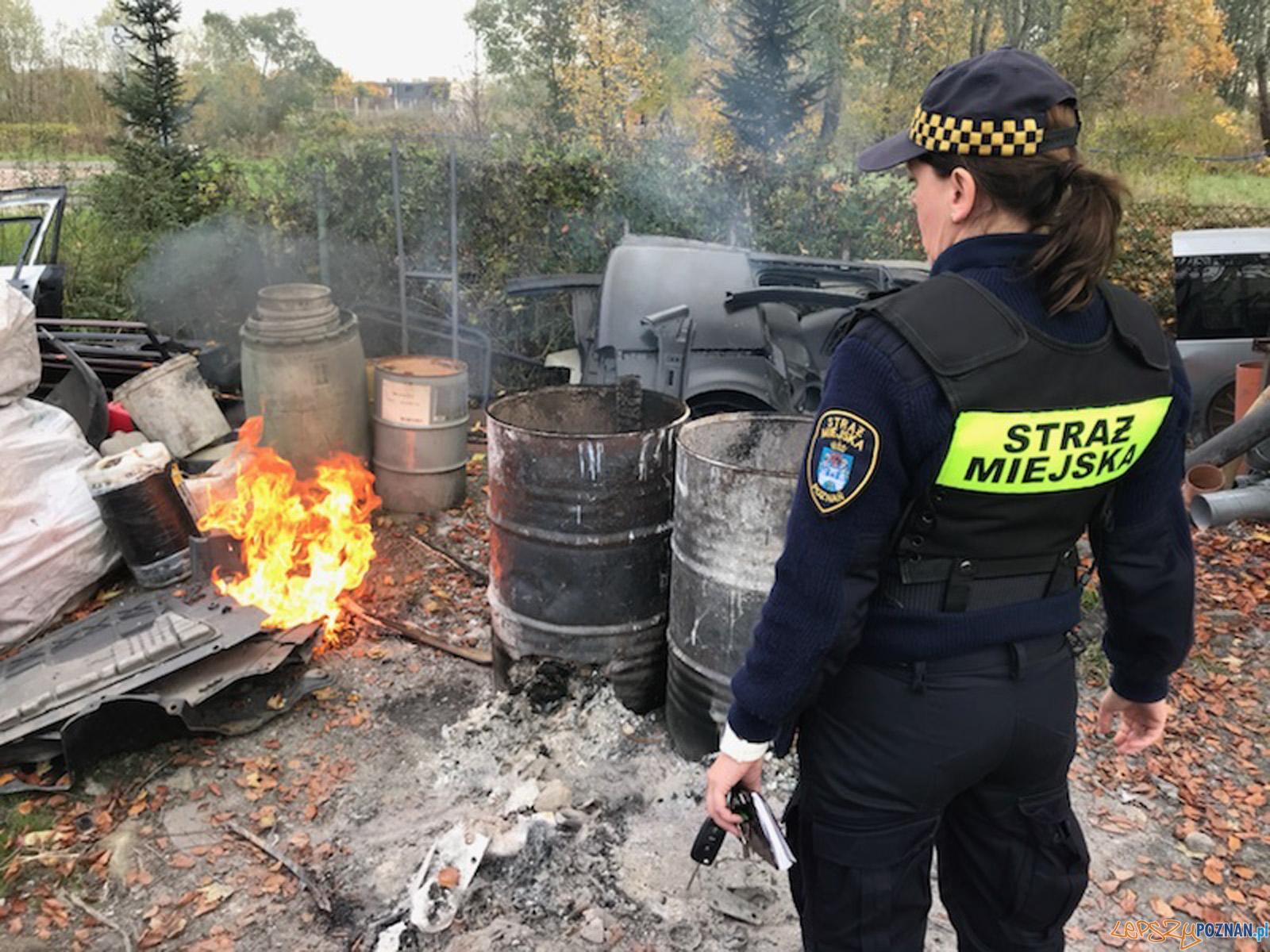 Interwencja Eko Patrolu Straży Miejskiej  Foto: SM / UMP