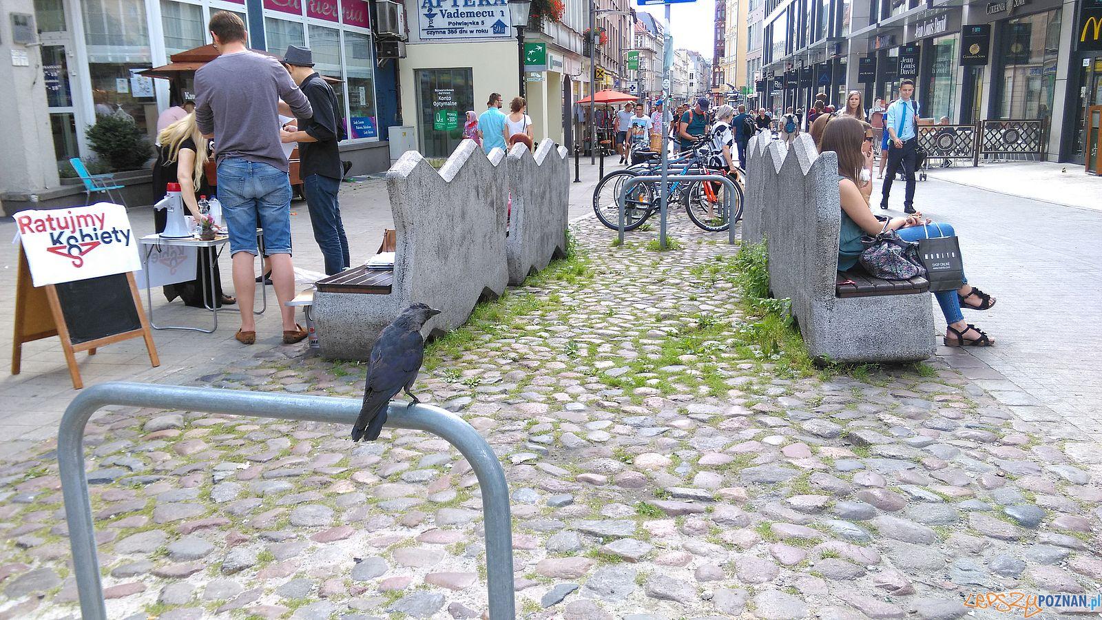 Stary Marych nieporządek wokól pomnika (7)  Foto: T. Dworek / ROSM