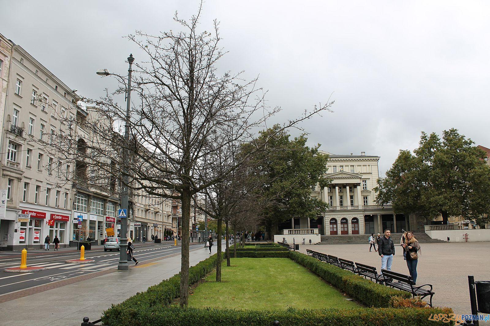 Plac Wolności - umierające głogi  Foto: T. Dworek / ROSM