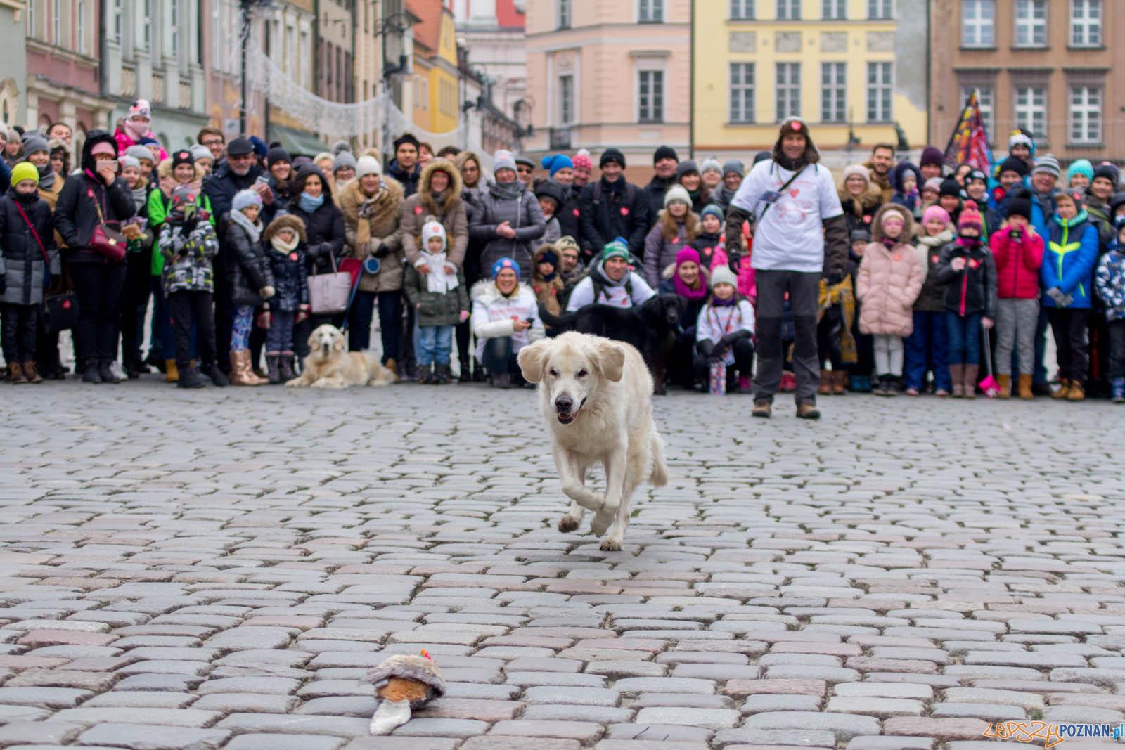 26. Finał WOŚP z Goldenami w Poznaniu  Foto: lepszyPOZNAN.pl / Ewelina Jaskowiak