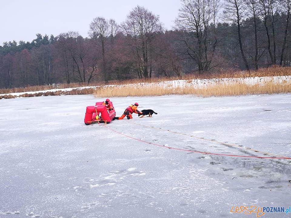 Ratowali kejtra z zamarzniętego jeziora!  Foto: OSP Skoki / Piotr Kaczmarek