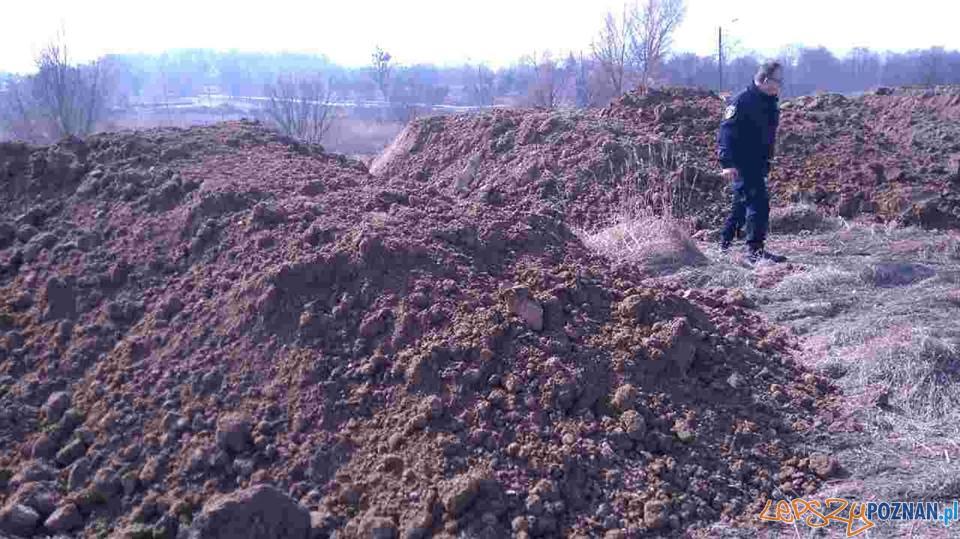 Deweloperzy wywożą nielegalnie ziemię  Foto: Straż Miejska
