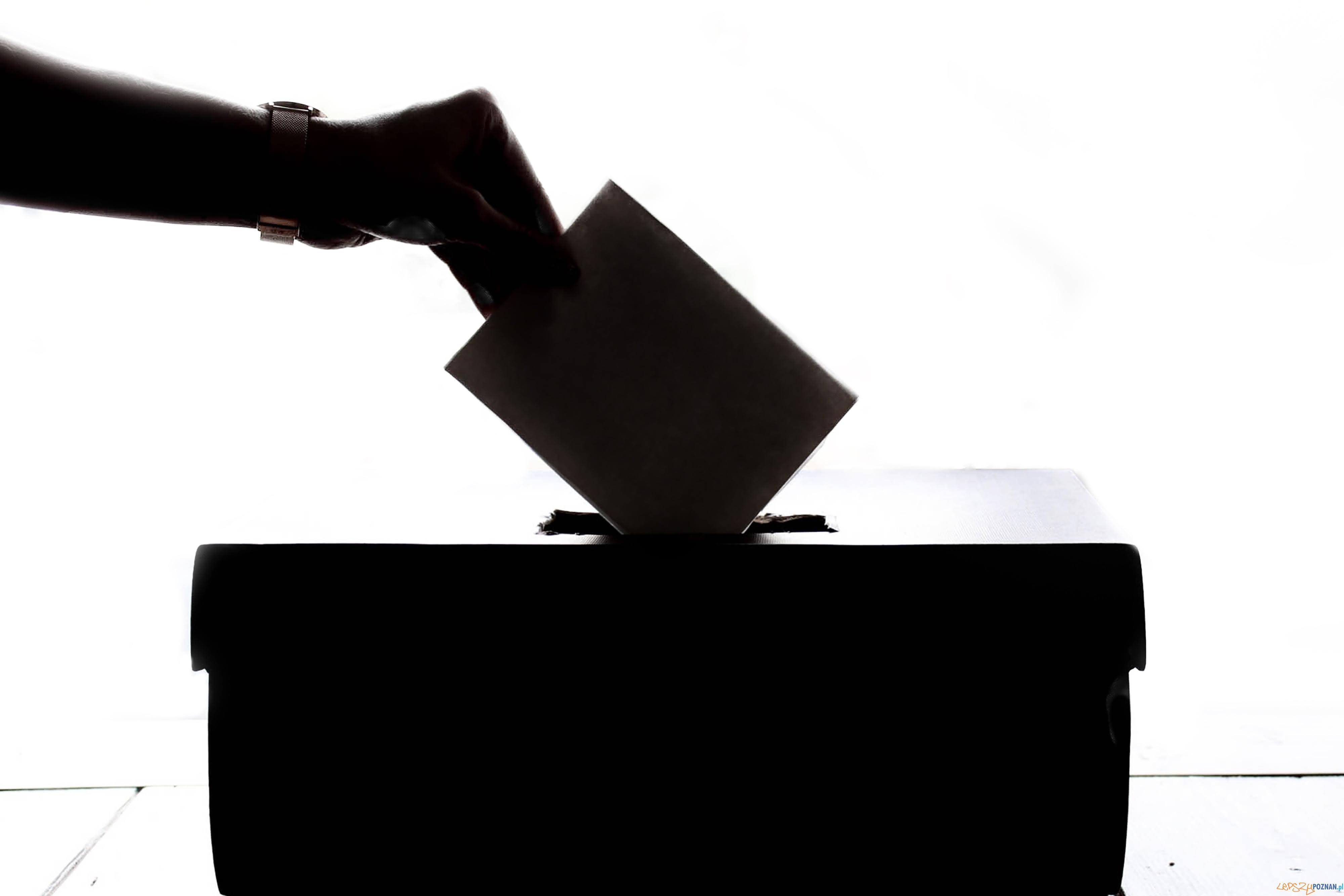Wybory  Foto: Element5 Digital