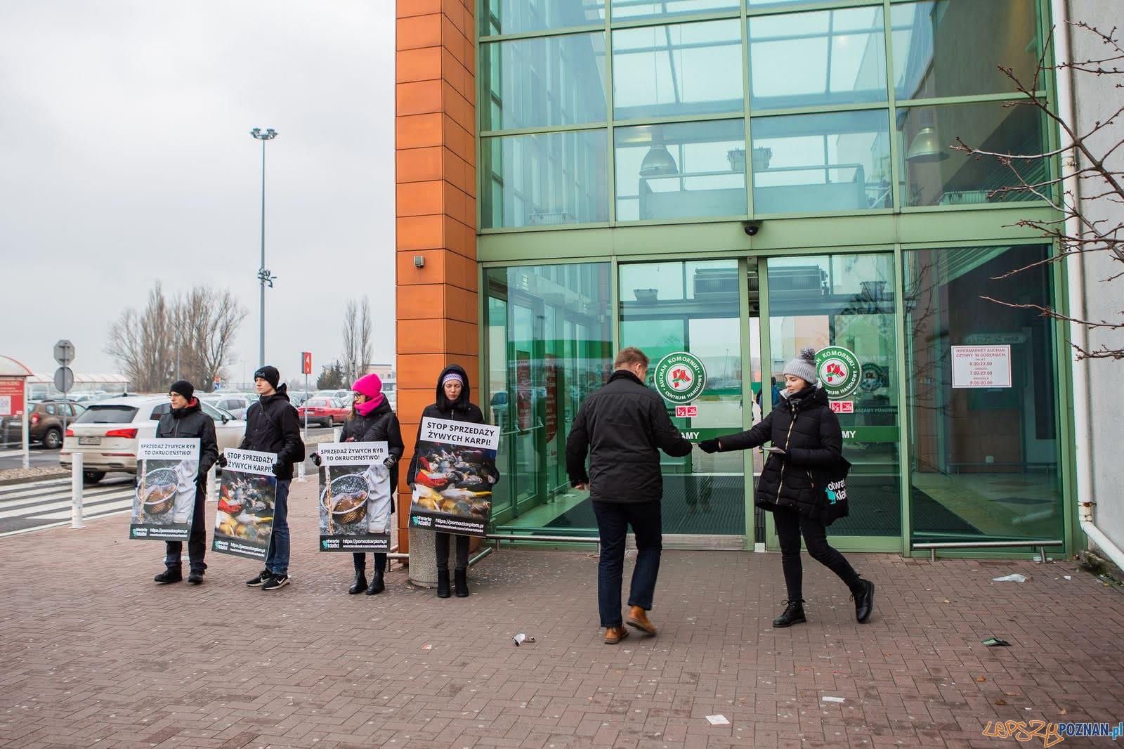 Ptotest przeciw sprzedaży żywych karpii  Foto: Otwarte Klatki / materiały prasowe