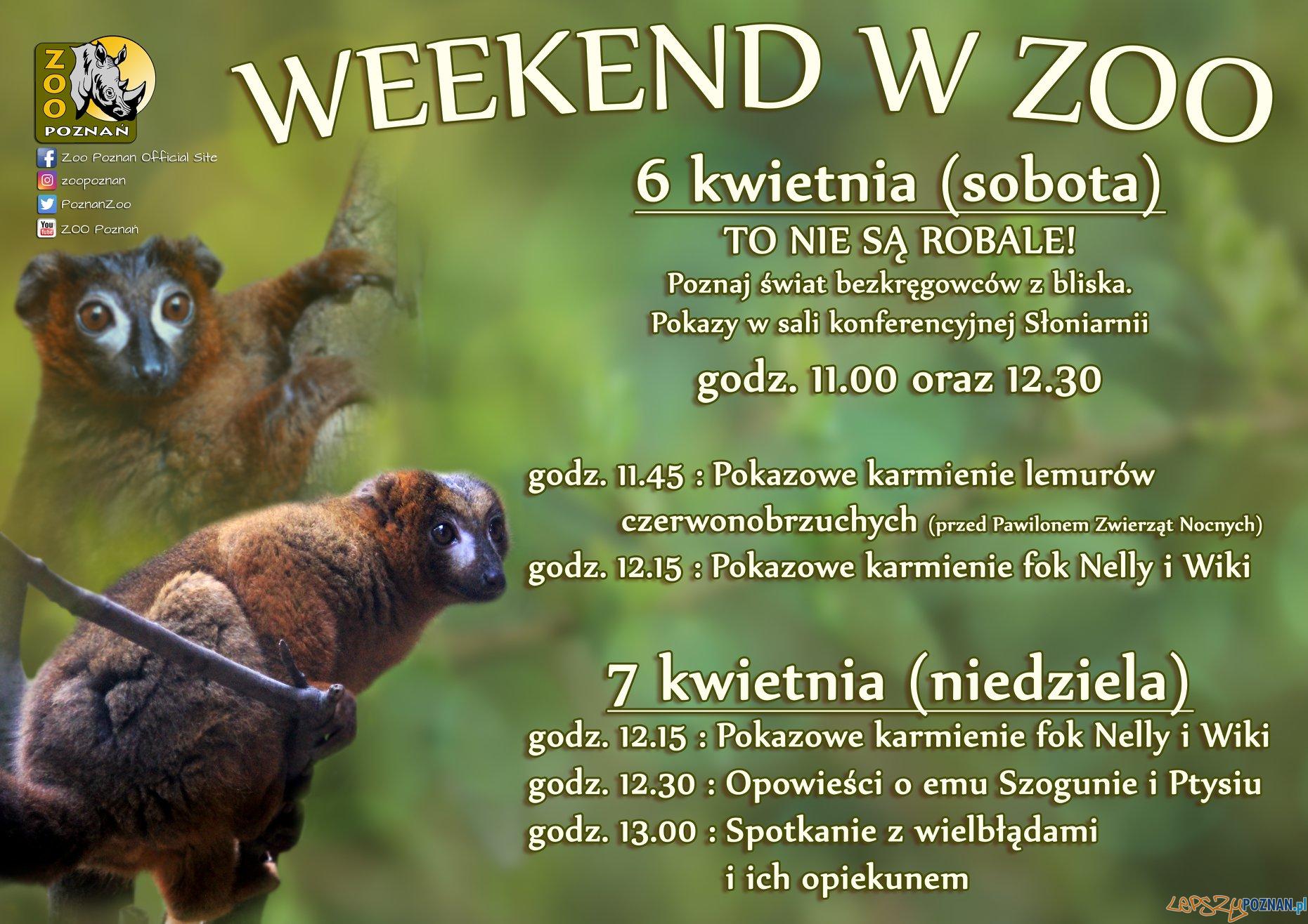 Weekend w Zoo  Foto: materiały prasowe