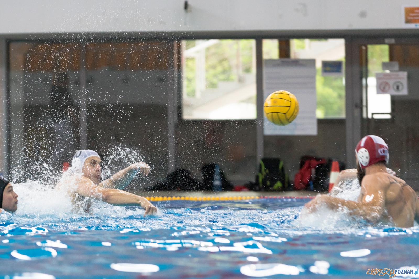 Waterpolo Poznań - Arkonia Szczecin  Foto: lepszyPOZNAN.pl/Piotr Rychter