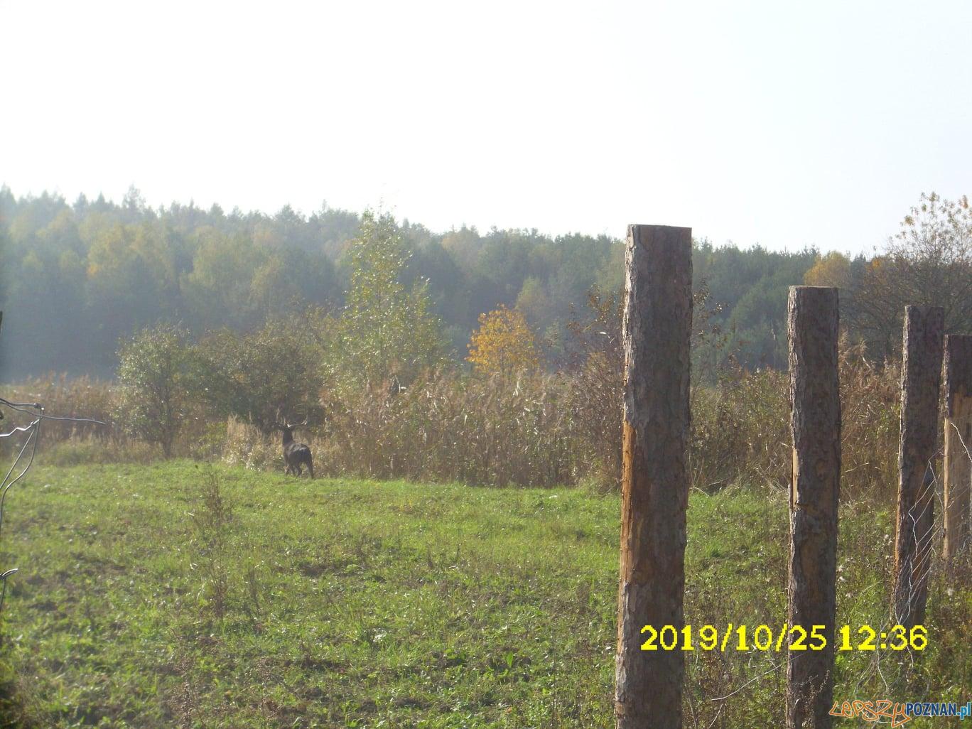 Interwencje Straży Miejskiej  Foto: UMiG w Murowanej Goślinie