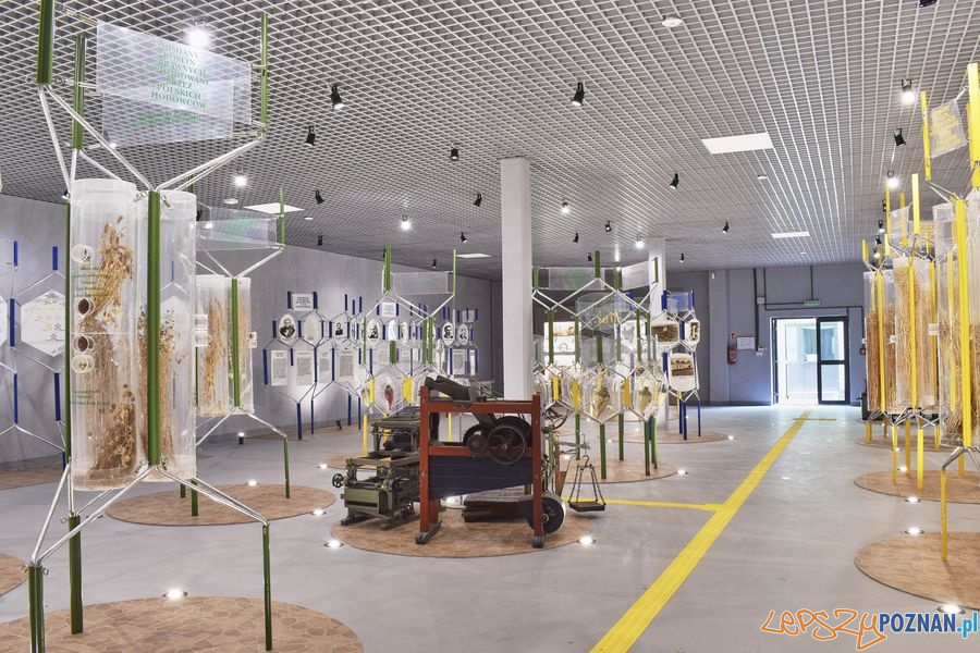 Muzeum Rolnictwa w Szreniawie (9) Foto: materiały prasowe muzeum
