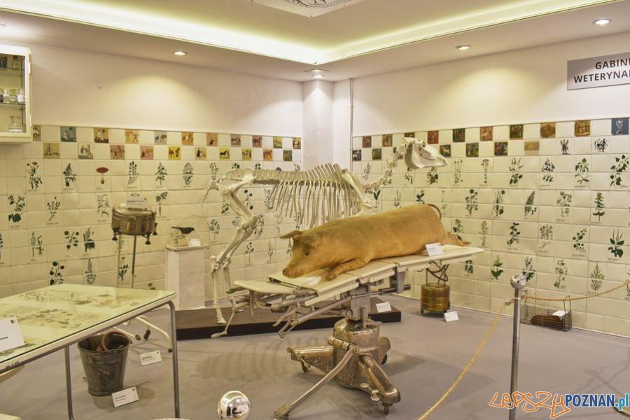 Muzeum Rolnictwa w Szreniawie (6)  Foto: materiały prasowe muzeum