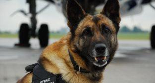 czworonożni funkcjonariusze Straży Granicznej  Foto: materiały prasowe