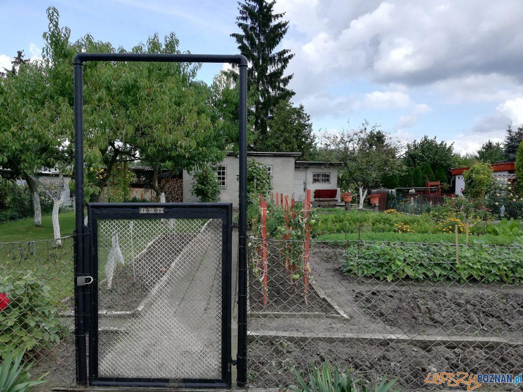 Ogródki działkowe Foto: materiały prasowe