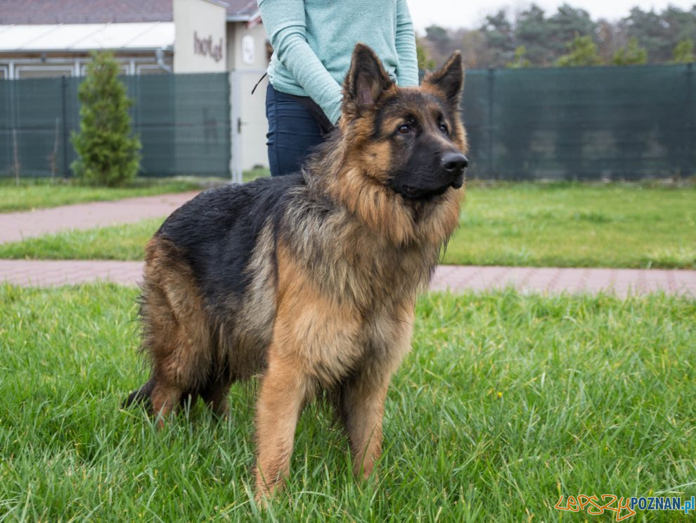 Pies - Schronisko dla Zwierząt w Skałowie  Foto: Schronisko dla Zwierząt w Skałowie
