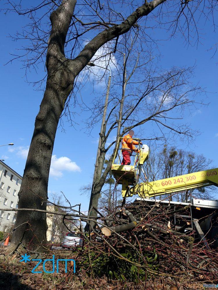 Pielęgnacja drzew  Foto: materiały prasowe / ZDM